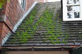 Roof-Moss-Service-Residential
