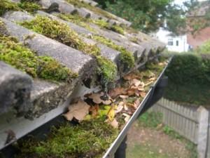 moss-blocked-gutter